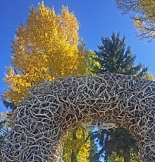 Jackson's elk antler arches in fall